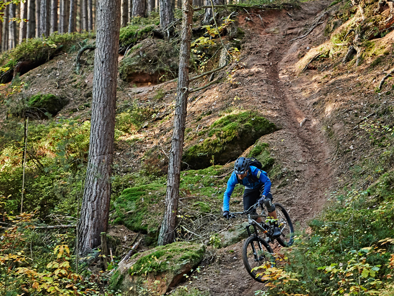 Trails bei der Mountainbike Tour